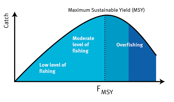 Sustainable Yield Maximums